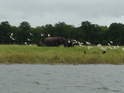 Elephants enjoying the river banks too!